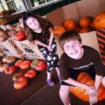 Choosing Pumpkins 10.8.17 #1