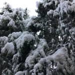 Snow Vintage Lake 3.16.18 #10