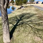 Solo Walk Vintage Lake Cherry Blossoms Shadows 3.29.18 #2