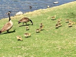 Goslings Vintage Lake 4.26.18