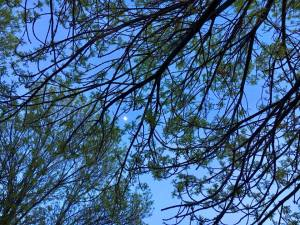 Moon through the Trees 4.25.18