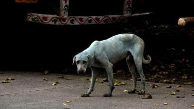 Photo of Gauhati High Court stays Nagaland government's ban on sale of dog meat