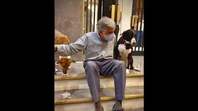Happy Birthday Ratan Tata: 5 Insta posts by the business tycoon that show his love for animals – it s viral