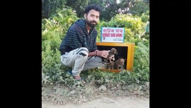 Man transforms old discarded TV sets into 'tiny houses' for stray dogs. Watch – it s viral