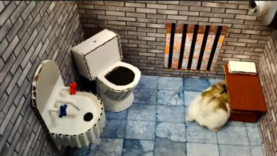 This detailed hamster escape maze is too entertaining to miss. Watch – it s viral