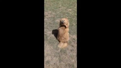 Kiko the doggo can rotate her head 180 degrees. See video to believe – it s viral