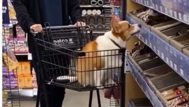Netizens can't stop gushing over this well behaved dog. Watch – it s viral