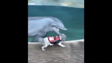 Video featuring doggo and dolphin zoomies may melt your heart. Watch – it s viral