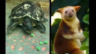 Zoo shares happy videos featuring turtle, squirrel monkeys and tree kangaroo – it s viral