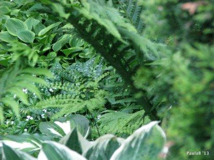 Hostas, Ferns & Lungwort