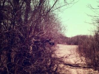coves-april-e