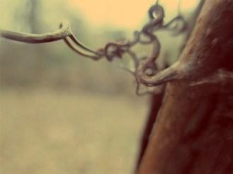 orchard2