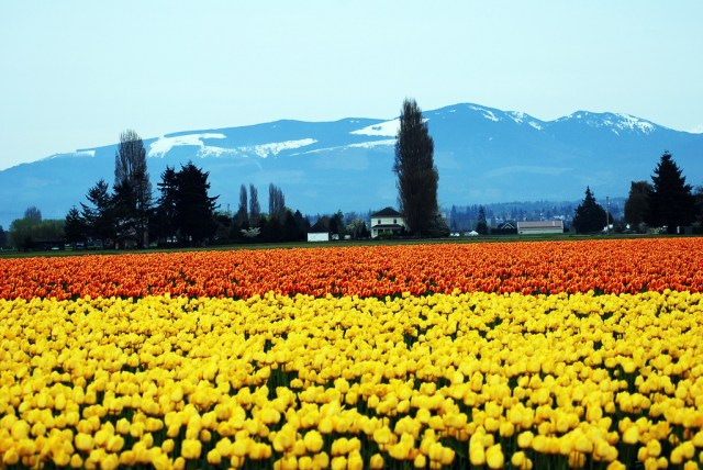 beautiful places, skagit valley