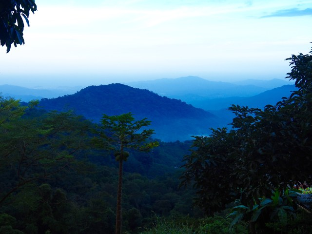 Photo of a forest in Minca, Colombia, the tops of the forest trees are visible as the background is a mountain in the far distance.