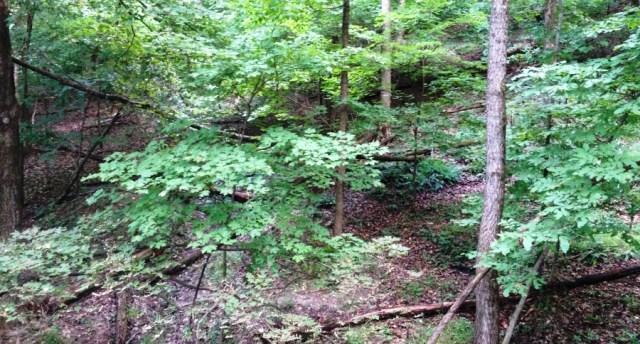 Trails On Hillside Cropped