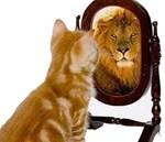 self inspection cat lion