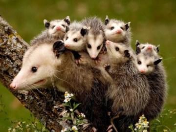 TOP 10 Most Dedicated Animal Moms