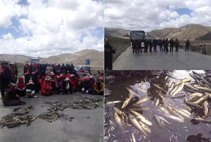 Tibet-Minyak-2016-212