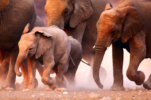 Elephants stampeding in the #LawBlogs Room