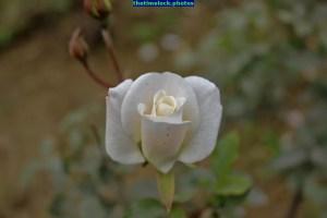 IMG_1905 (2)