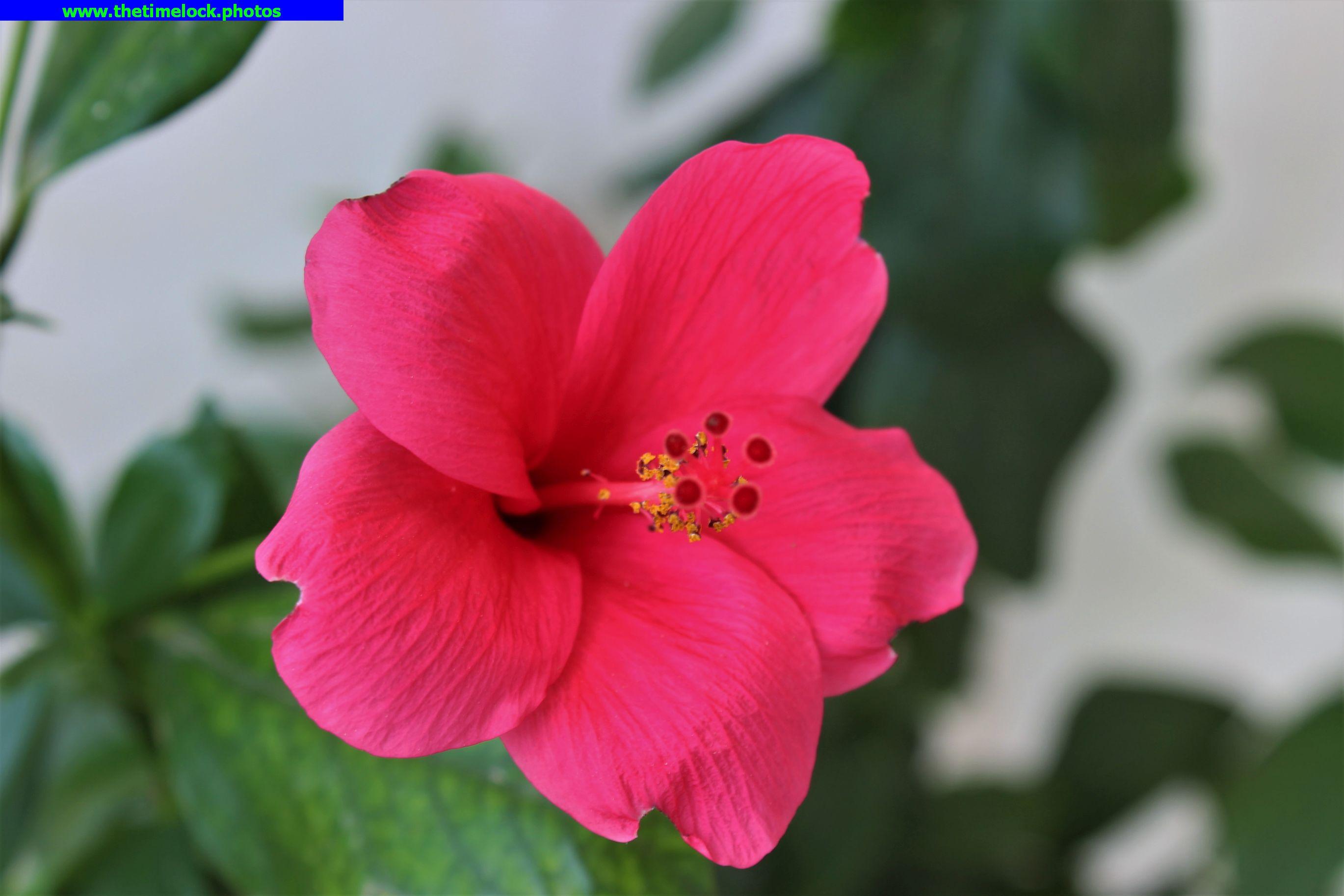 Flowers in the garden the time lock flowers in the garden izmirmasajfo
