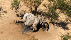 Botswana authorities identify cause of mysterious elephant deaths