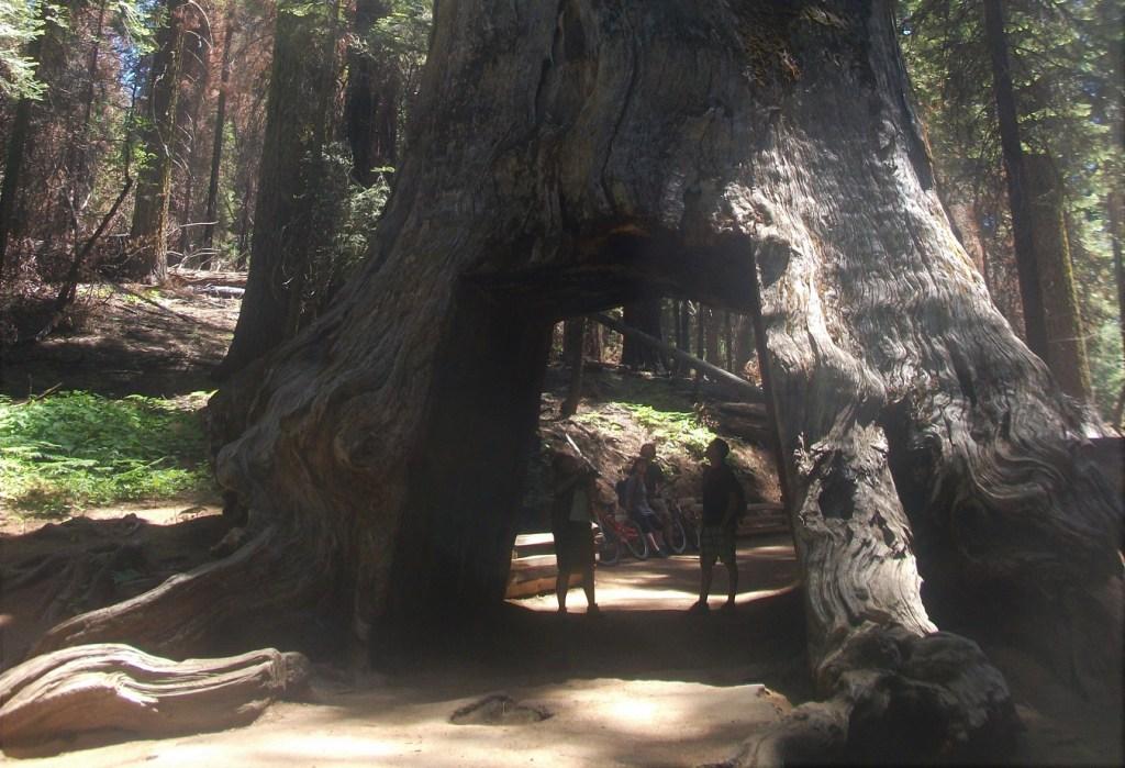 Mariposa Grove Yosemite National Park