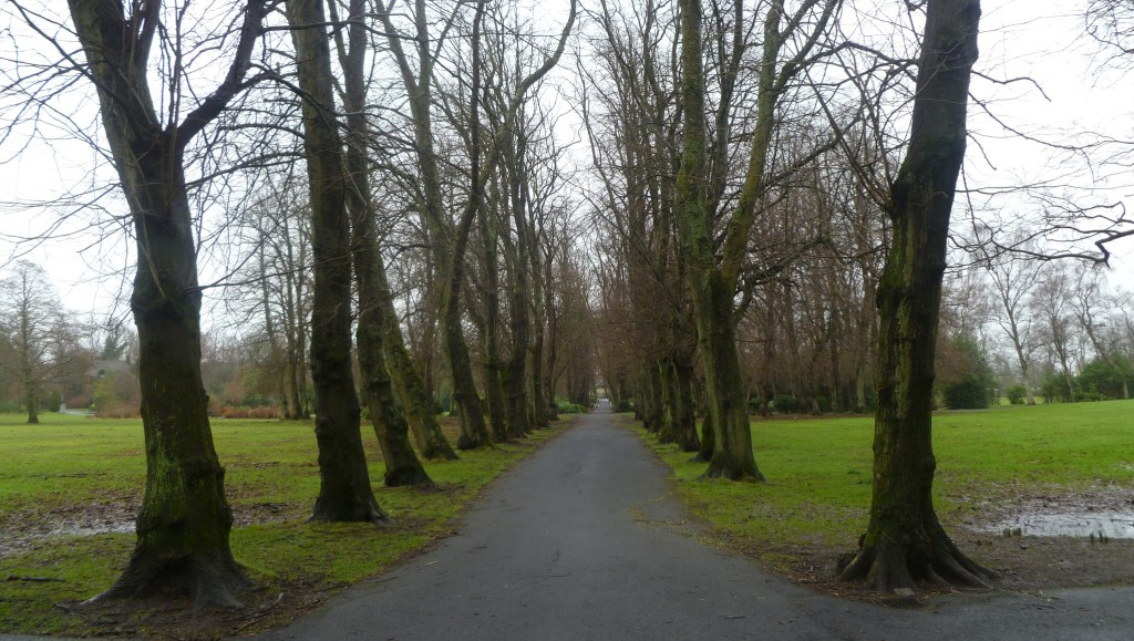Avenue of trees in Maxwell Park, Glasgow