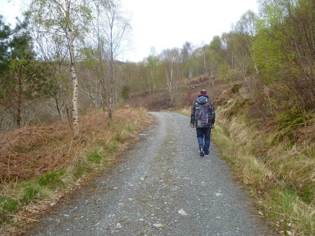 Cashel Native Forest Pathways