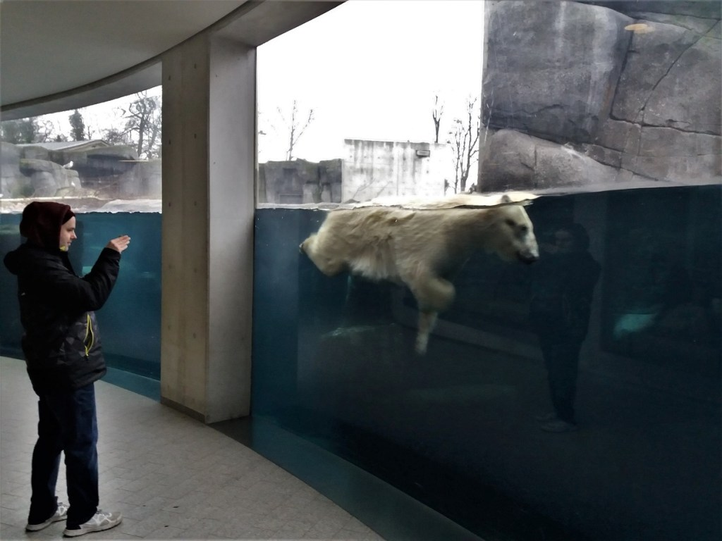 Underwater Polar Bear at Copenhagen Zoo