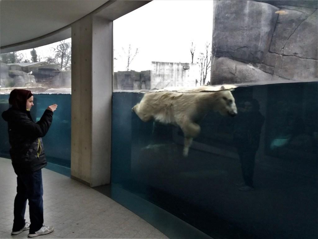 Underwater Polar Bear at Copenhagen Zoo