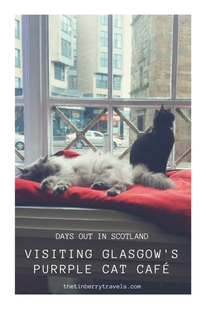 Cat cafes are one of the latest crazes that have made it over to the UK. We headed to our local option the Purrple Cat Cafe to find out what it's all about. Here's our guide to visiting Glasgow's Cat Cafe and our recommendations for a successful cafe session . | UK Cat Cafe | Cat Cafe Glasgow | #CatCafe #Scotland #Europe