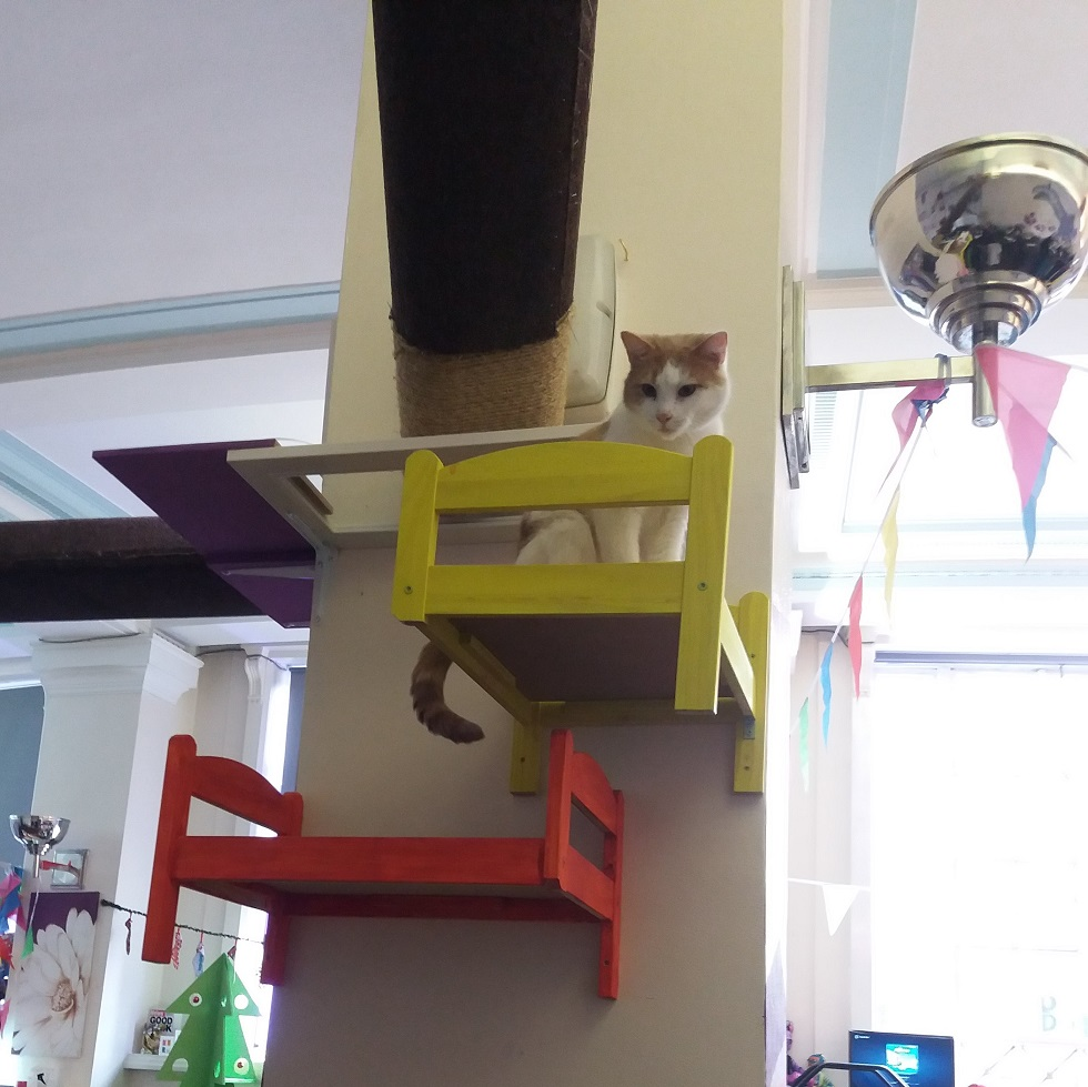 Purrple Cat Cafe, Glasgow