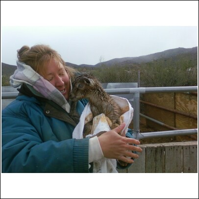 Nana the goat's new baby