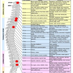 Nerves In Neck And Shoulder Diagram Parallel Circuit The Tin Man I Because Everyone Needs Oil My