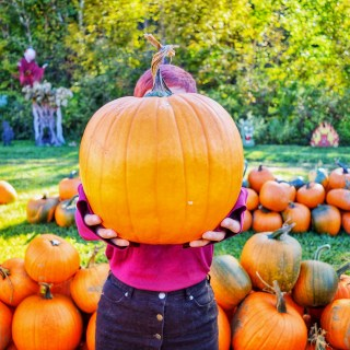 Pumpkin picking at Whitney's Farm