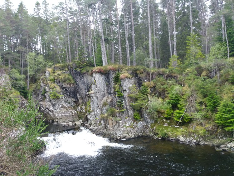 A sheer cliff-like gorge covered in moss and mushrooms with a waterfall tumbling below. Above the gorge is a forest of ash trees and pine trees.