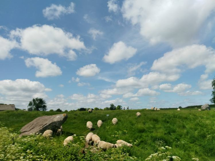 A small herd of grazing sheep in Avebury among a couple of the ancient stones. The sky is blue with many small clouds, and the grass is overgrown and green.