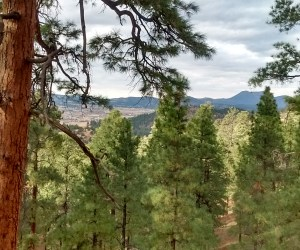 Flagstaff Peaceful View of the World