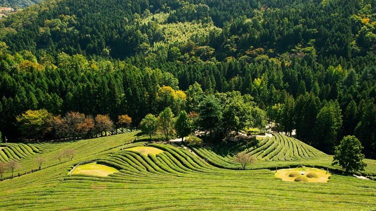 greenery korea tea