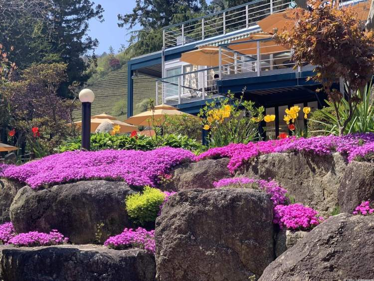 The restaurant is a two story building with a wide balcony. There are tables with umbrellas, and in the foreground there are rocks covered in creeping pink flowers.