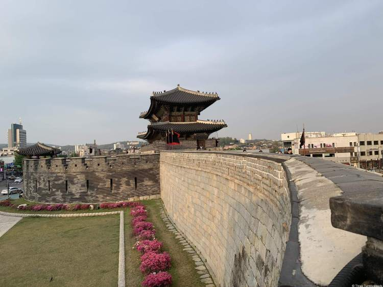 The fortress walls along the right in stone. Below the walls are pink bushes in full bloom. In the back the fortress building is seen as a two story pagoda-style building.