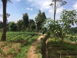 Gunung Gede via Gunung Putri Kebun