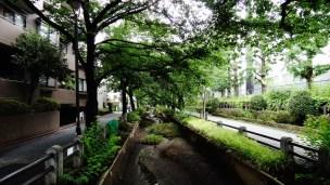 Sakurashinmachi old canal Tokyo low water