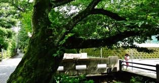 Sakurashinmachi old canal trees girl Tokyo