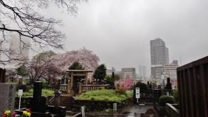 Yanaka cemetery Tokyo rain dark cherry
