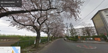 Shinei-cho danchi Saitama Japan buildings cherry trees