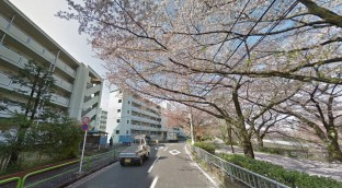 Toei Minami Tanaka Apartment cherry trees 2