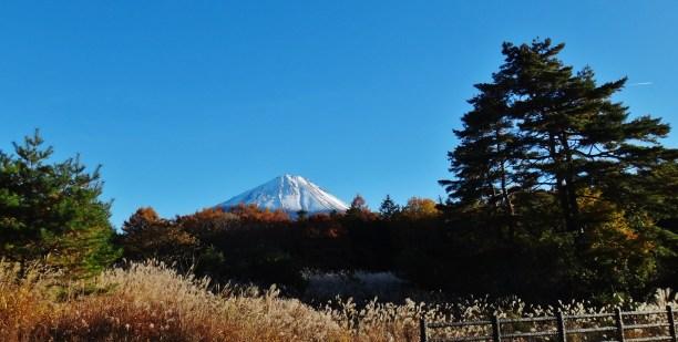 Mt. Fuji autumn