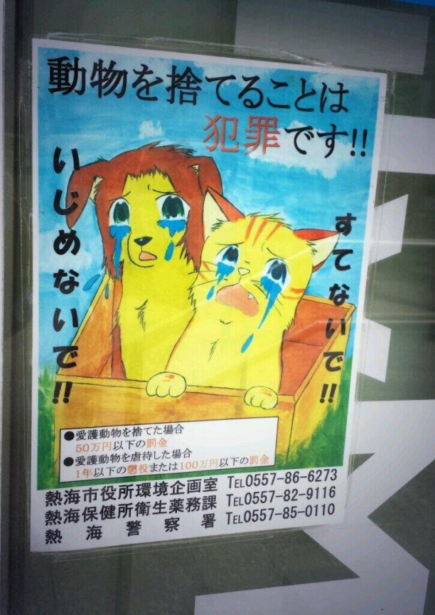 scaredY cats Japan sign